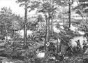Dunmore's War